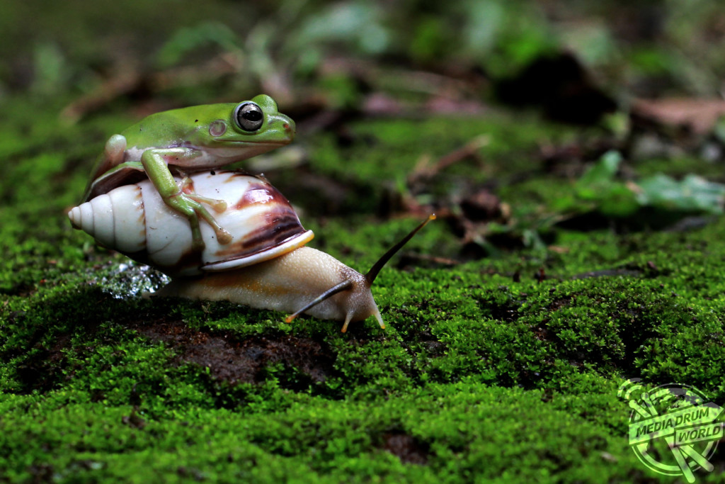 Fearless Frog
