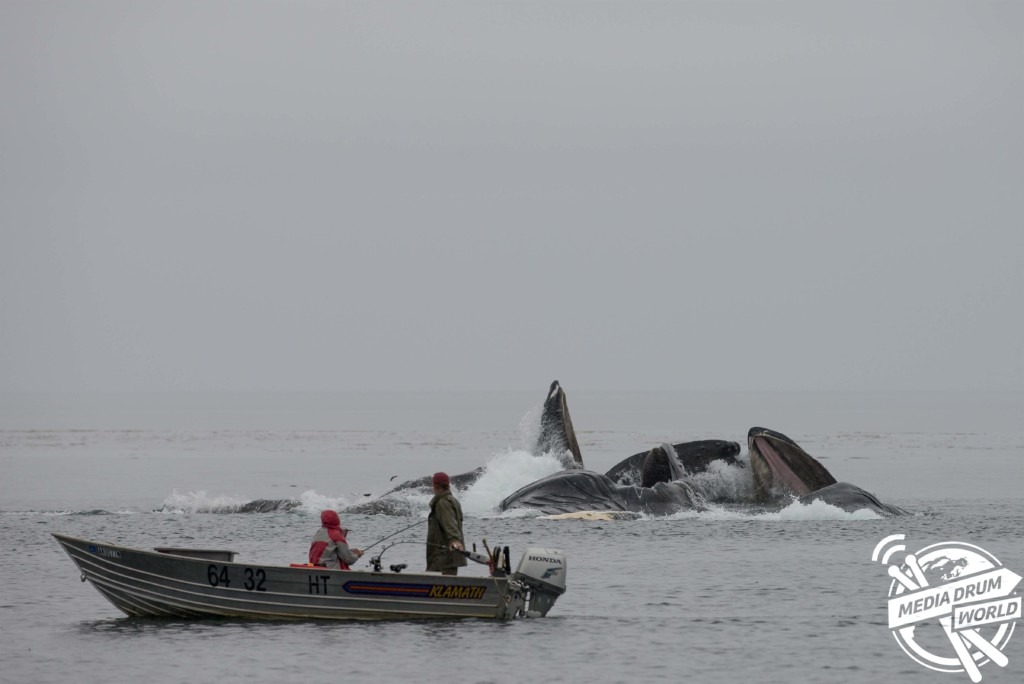 Fishermen watch the whale spectacle.